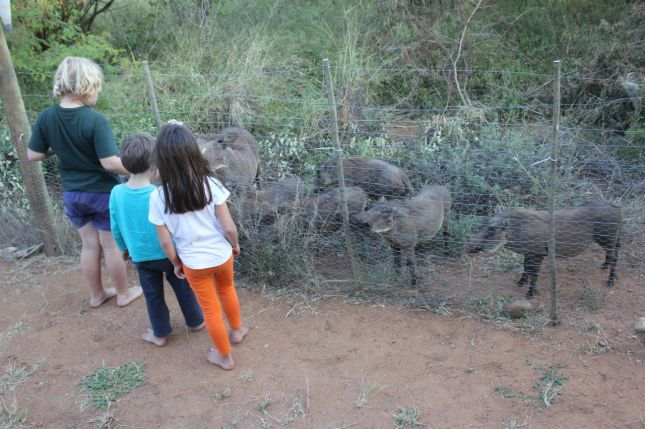 Feeding apples to warthogs (with their cousin, Kyra)...