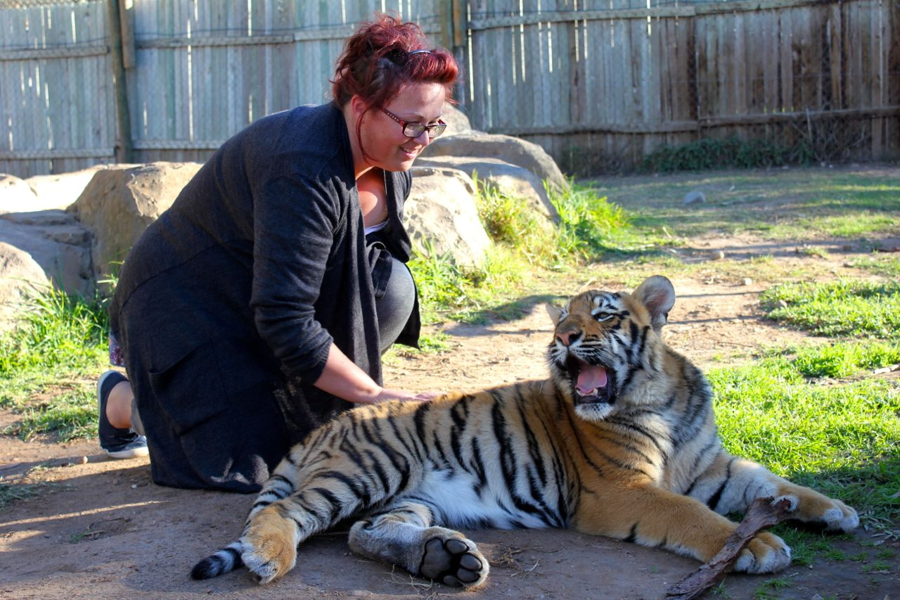 """And, as a special Mother's Day gift, Nick paid a bit extra - and I got to spend time playing with a tiger cub. This """"little"""" cub (a male) will grow to be 6 times his current size!!"""