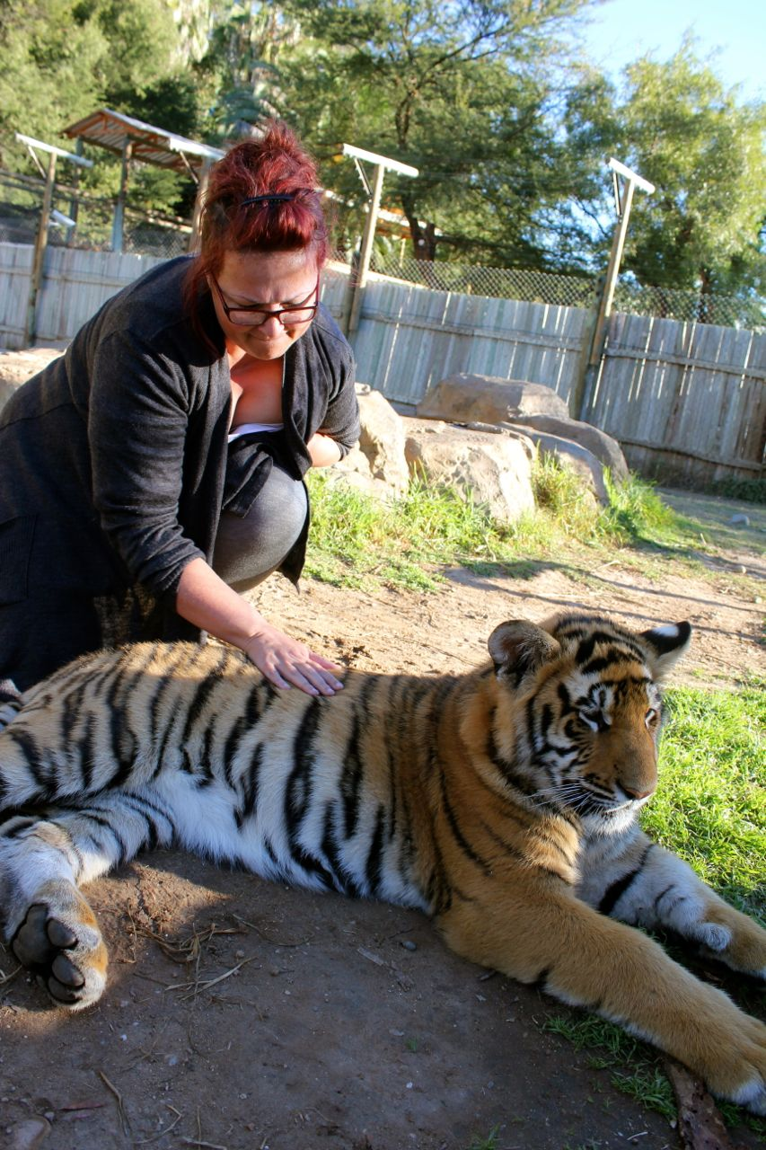 Petting a tiger cub on mother's day...