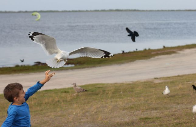 Joah feeding pizza to a gull at the Indian River (in the distance, you can see one of the kite surfers)...