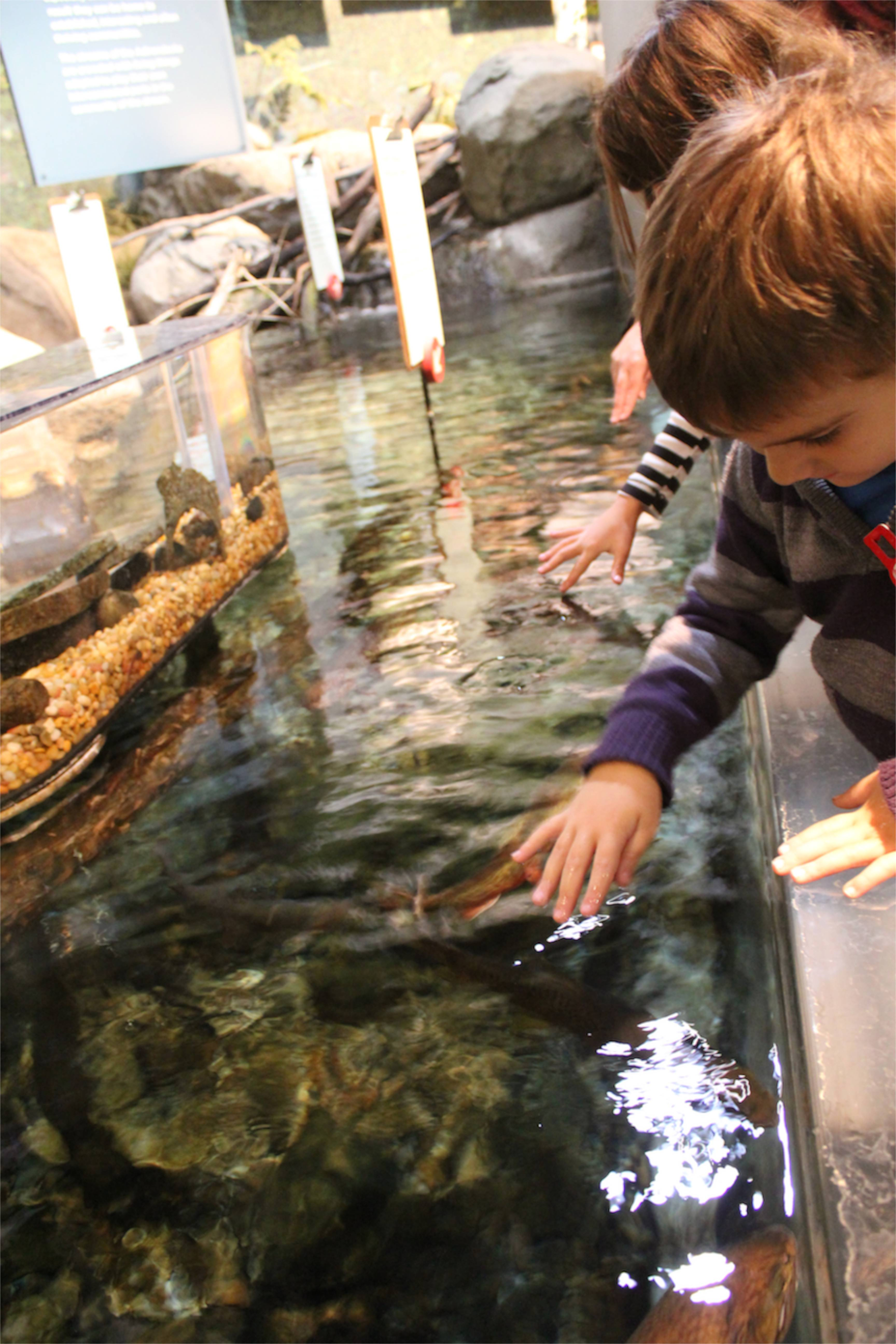 joah stroking trout