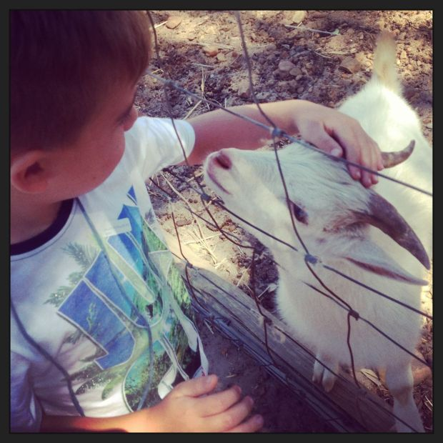 Joah really bonded with this little goat. He now says it's *his* goat… and he wants to visit it every day!