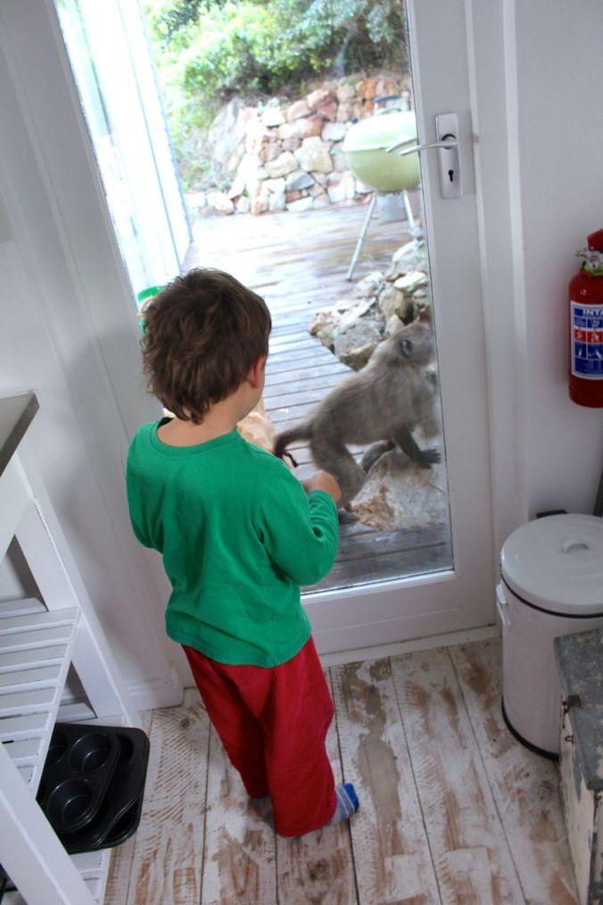 Joah watching a small baboon...
