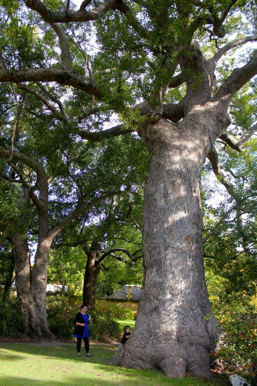 wine estate tree