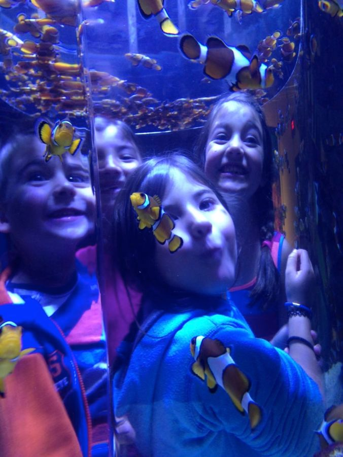 Cousins and clown fish at the aquarium...