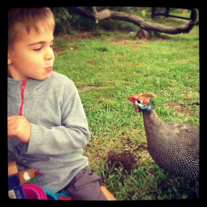 Joah and the hungry guinea fowl at Kirstenbosch Gardens...