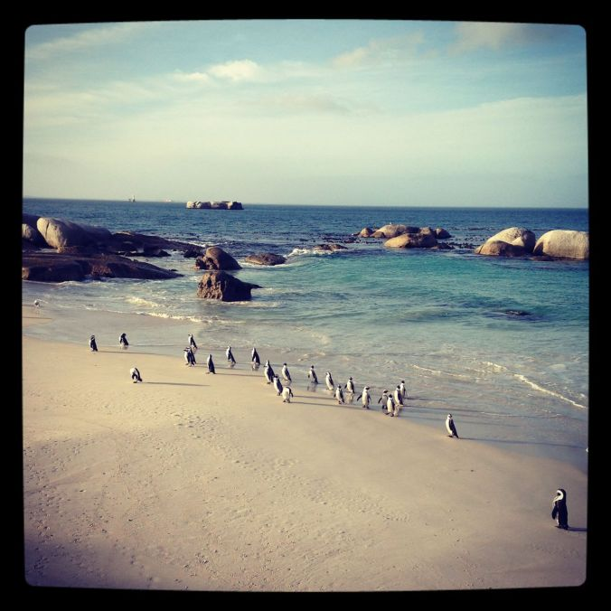 The penguins at Simon's Town...