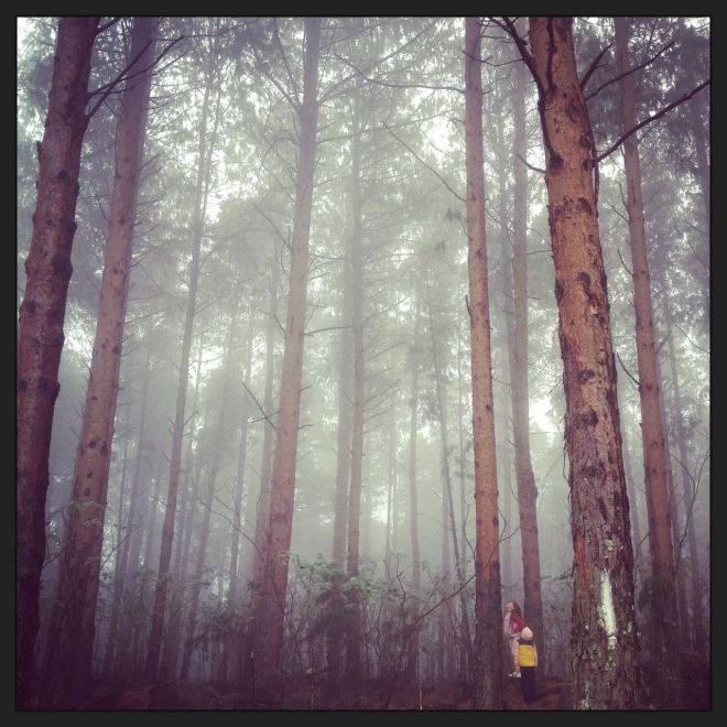 The kids exploring some of the misty forests...